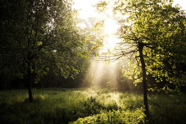 木々の間に差し込む光